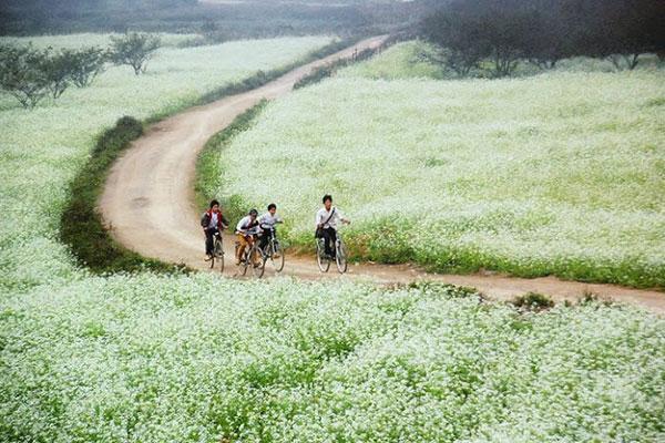 Tour Du Lịch Lào Cai – Yên Bái 5 Ngày 5 đêm (Di Chuyển Bằng ô Tô)